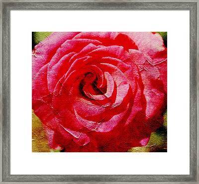 Aunt Lori's Roses Framed Print by Danielle Miller