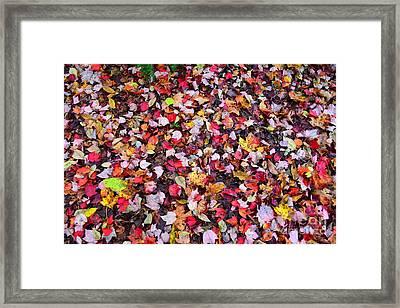 Auntumn Petals  Framed Print