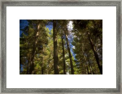 Aupouri Forest Framed Print by Graham Hughes