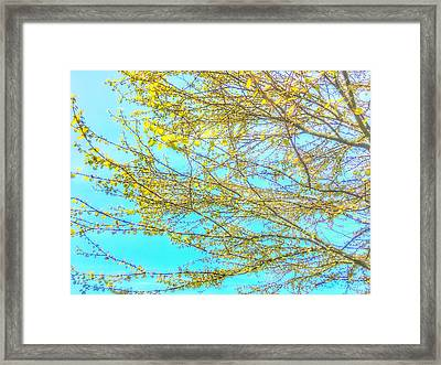 Framed Print featuring the photograph  Aura Of Springtime by Connie Handscomb