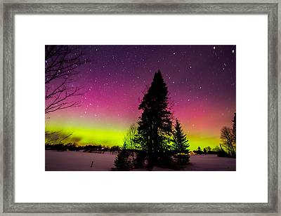 Aurora With Spruce Tree Framed Print by Tim Kirchoff
