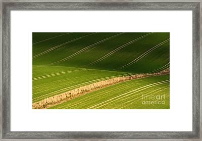 Aurulent Green Framed Print by Richard Thomas