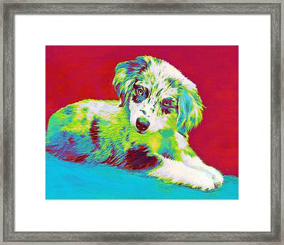Aussie Puppy Framed Print by Jane Schnetlage
