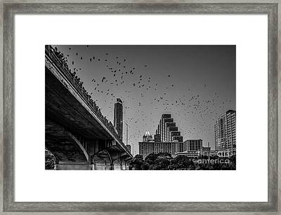 Austin Bat Watch Black And White Framed Print by Tod and Cynthia Grubbs