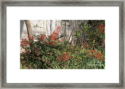 Framed Print featuring the photograph Austin Winter Berries by Linda Phelps