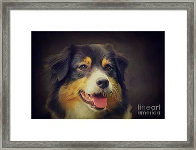 Australien Shepherd Portrait Framed Print by Angela Doelling AD DESIGN Photo and PhotoArt