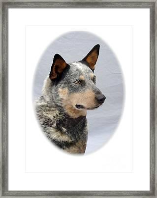 Australian Cattle Dog 262 Framed Print by Larry Matthews