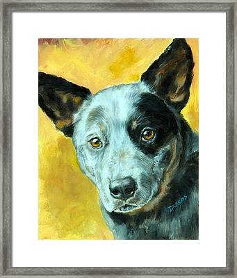Australian Cattle Dog Blue Heeler On Gold Framed Print by Dottie Dracos