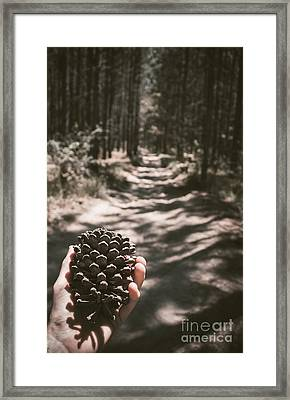 Australian Explorer Gathering Pine Cones Framed Print by Jorgo Photography - Wall Art Gallery