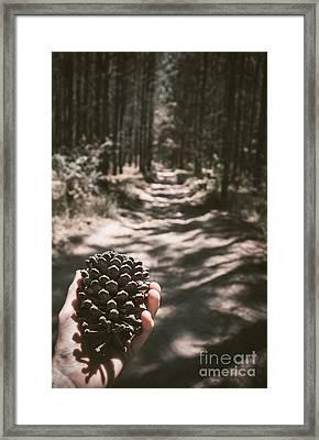 Australian Explorer Gathering Pine Cones Framed Print