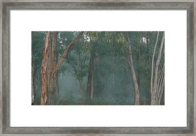 Australian Morning Framed Print