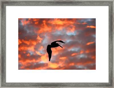 Australian Pelican Silhouette Framed Print