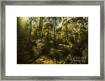 Australian Rainforest Landscape Framed Print