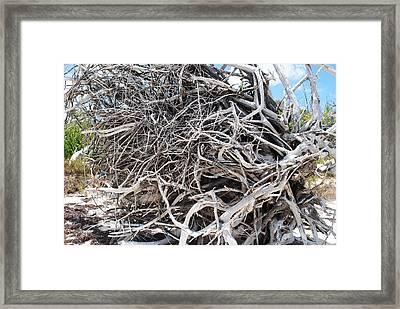 Australian Roots Framed Print by Karla Kernz
