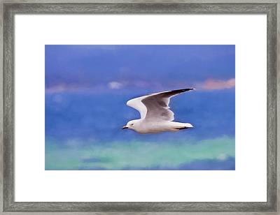 Australian Seagull In Flight Framed Print by Michelle Wrighton