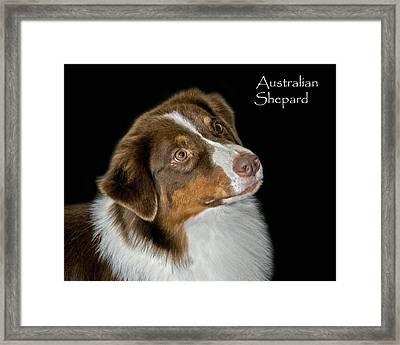 Australian Shepard Framed Print