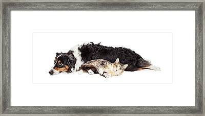 Australian Shepherd Dog And Cat Laying Together Framed Print by Susan Schmitz