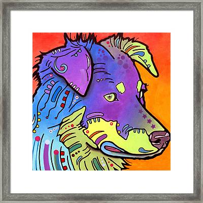 Australian Shepherd Iv Framed Print by Dean Russo