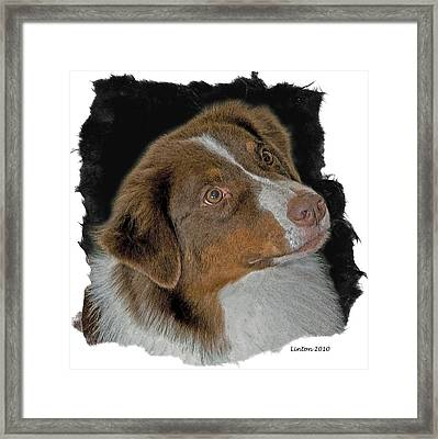 Australian Shepherd Framed Print by Larry Linton
