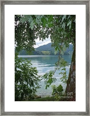 Austrian Lake Through The Trees Framed Print by Carol Groenen