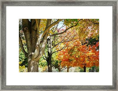 Autum Canopy Framed Print by Peter  McIntosh
