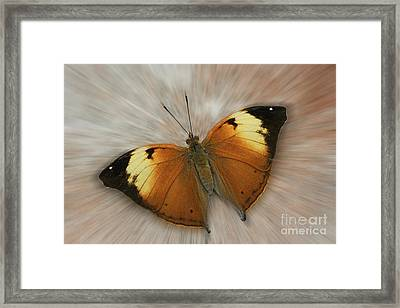 Autumn Leaf Butterfly Zoom Framed Print
