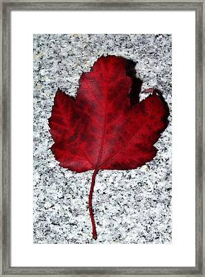 Autum Maple Leaf 1 Framed Print by Robert Morin