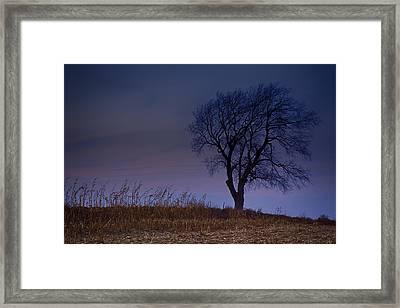Autum Tree Framed Print