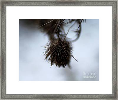 Autumn 2 Framed Print