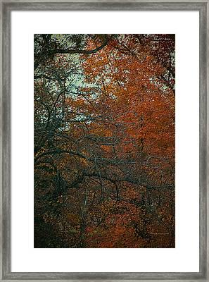 Autumn 2015 Orange Trees Pa 01 Vertical Framed Print