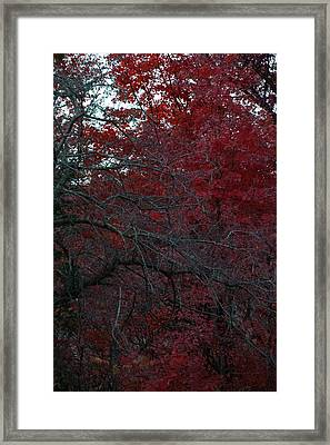 Autumn 2015 Red Trees Pa 02 Vertical Framed Print