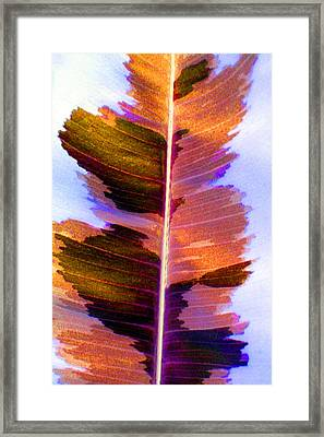 Autumn Abstract Framed Print by Carolyn Stagger Cokley