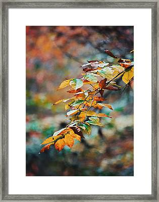 Framed Print featuring the photograph Autumn Aesthetics by Parker Cunningham