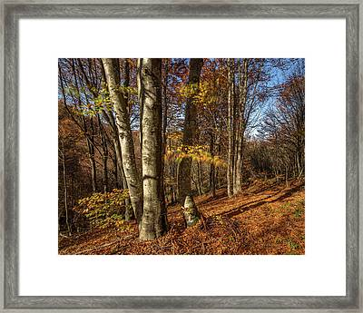 Autumn Afternoon In Forest Framed Print by Davorin Mance