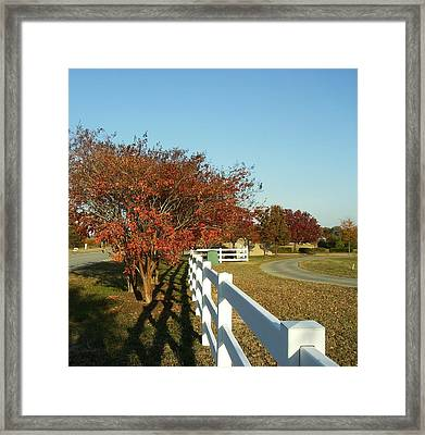 Autumn Afternoon With Shadows Framed Print by Anne-Elizabeth Whiteway