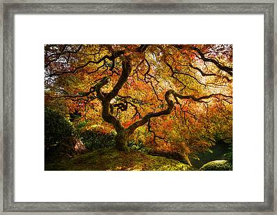 Autumn Arrival Framed Print