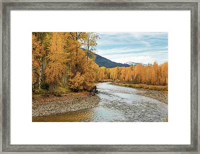 Autumn Aspen By The River Framed Print by Mary Jo Allen