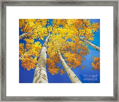 Autumn Aspen Canopy Framed Print by Gary Kim
