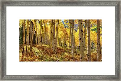 Autumn Aspen Forest Aspen Colorado Panorama Framed Print