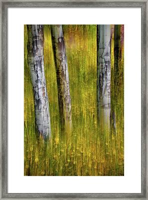 Framed Print featuring the photograph Autumn Aspen Recollections by John De Bord
