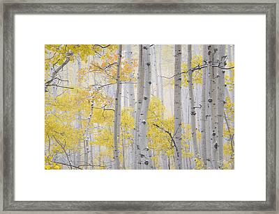 Autumn Aspens 2 Framed Print by Leland D Howard