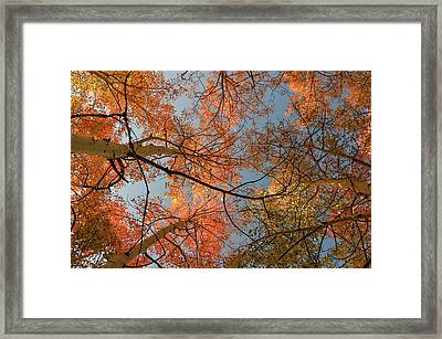 Autumn Aspens In The Sky Framed Print