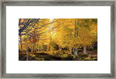 Autumn Aspens Framed Print by TL  Mair