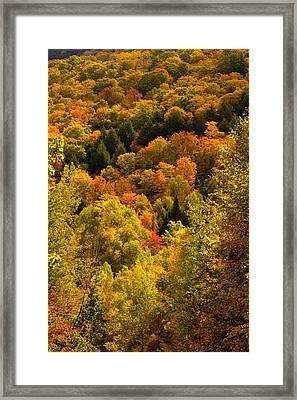 Autumn At Acadia Framed Print by Brent L Ander