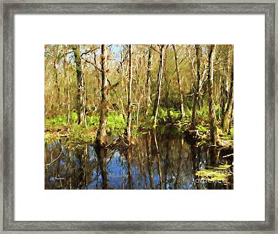 Autumn At Brooker Creek Preserve Framed Print