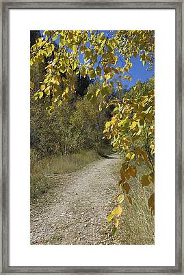 Autumn At Iron Creek Framed Print