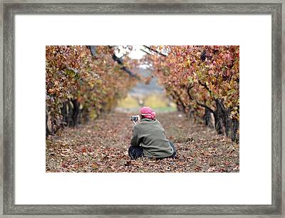 Framed Print featuring the photograph Autumn At Lachish Vineyards 1 by Dubi Roman