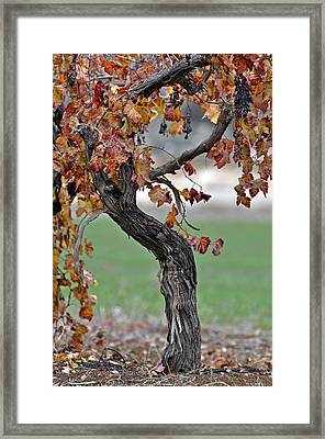 Framed Print featuring the photograph Autumn At Lachish Vineyards 3 by Dubi Roman