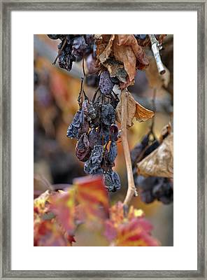 Framed Print featuring the photograph Autumn At Lachish Vineyards 4 by Dubi Roman