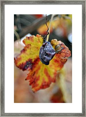 Framed Print featuring the photograph Autumn At Lachish Vineyards 5 by Dubi Roman